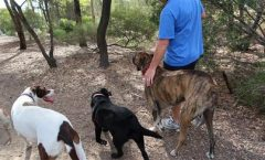 What Basic Dog First Aid Do You Need For Hunting Dogs: