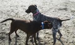 Satisfying your hunting dog around the home
